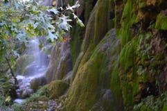 Cachoeira e borboleta em Texas Imagem de Stock