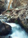 Cachoeira e raizes Imagens de Stock Royalty Free