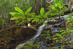 Cachoeira e rhododendron Fotos de Stock