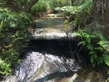 Cachoeira e samambaias Fotos de Stock