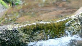 Cachoeira em um rio da floresta na mola vídeos de arquivo