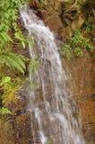 Cachoeira em uma floresta Foto de Stock Royalty Free