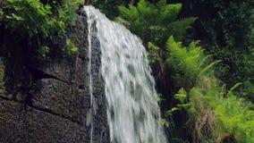 A cachoeira está fluindo sobre a parede de tijolo de pedra, samambaias está crescendo ao redor video estoque