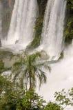 Cachoeira Iguacu Fotografia de Stock