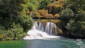 Cachoeira na floresta video estoque