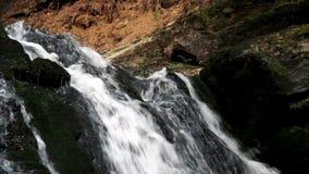 Cachoeira na floresta carpathian video estoque