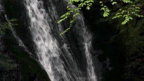 Cachoeira na floresta carpathian vídeos de arquivo