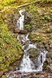Cachoeira na floresta da faia Fotos de Stock Royalty Free