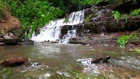 Cachoeira na floresta das montanhas que cai à árvore quebrada vídeos de arquivo