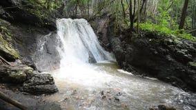 Cachoeira na floresta de bambu vídeos de arquivo