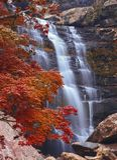 Cachoeira na floresta do outono Foto de Stock Royalty Free