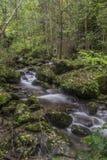 Cachoeira na floresta do outono Fotos de Stock Royalty Free