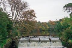 Cachoeira na floresta do outono Fotos de Stock