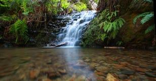 Cachoeira na floresta do redwood fotos de stock royalty free