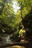 Cachoeira na floresta em montanhas Fotografia de Stock