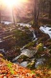 Cachoeira na floresta enevoada do outono Imagens de Stock Royalty Free