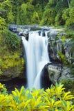 Cachoeira na floresta tropical fotos de stock