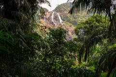 A cachoeira na selva Fotografia de Stock Royalty Free