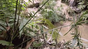 Cachoeira na selva tropical natural - Tailândia 4K filme