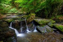 Cachoeira nas madeiras Fotos de Stock