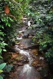 Cachoeira nas madeiras Imagem de Stock
