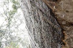Cachoeira nas rochas Imagem de Stock Royalty Free