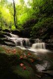 Cachoeira no amor Imagens de Stock Royalty Free