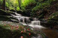 Cachoeira no amor Fotografia de Stock Royalty Free