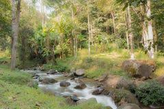 Cachoeira no inverno fotografia de stock royalty free