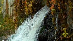 Cachoeira no parque vídeos de arquivo