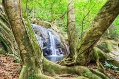 Cachoeira norte de Jedkod, Saraburi, Tailândia Fotografia de Stock Royalty Free