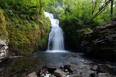 Cachoeira nupcial do véu na floresta imagens de stock royalty free