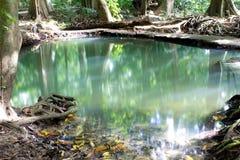 A cachoeira pequena Fotos de Stock Royalty Free