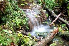 Cachoeira pequena Fotografia de Stock Royalty Free