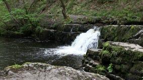 Cachoeira pequena video estoque