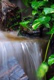 Cachoeira pequena com plantas fotografia de stock royalty free