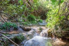 Cachoeira pequena em um córrego Amud da floresta Fotos de Stock