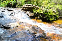Cachoeira pequena na floresta úmida em Wentworth Falls, Novo Gales do Sul, Austrália fotografia de stock royalty free