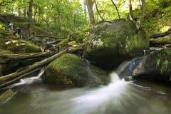 A cachoeira pequena na floresta Foto de Stock