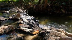 Cachoeira pequena na selva video estoque