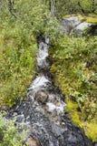 Cachoeira pequena nas madeiras Fotos de Stock Royalty Free