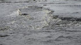 Cachoeira pequena no dia da nuvem video estoque