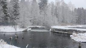 Cachoeira pequena no inverno video estoque