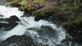 Cachoeira pequena que flui abaixo das rochas, rio da montanha que Raging entre as rochas na floresta, montanhas caucasianos, Euro filme