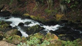 Cachoeira pequena que flui abaixo das rochas, rio da montanha que Raging entre as rochas na floresta, montanhas caucasianos, Euro vídeos de arquivo
