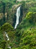 cachoeira profunda da floresta da ?gua clara das montanhas rochosas fotos de stock