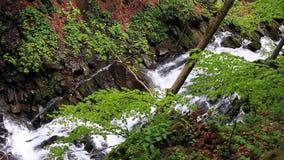 Cachoeira que cai em área arborizada Cachoeira da cascata nas montanhas Forest River vídeos de arquivo