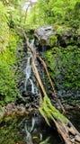 Cachoeira que corre através de rochas do molde verde fotografia de stock royalty free