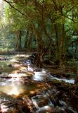 Cachoeira tropical Fotos de Stock
