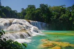 Cachoeiras de Cascadas de Água Azul Água Azul yucatan Fotos de Stock